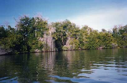 8-1998-ven-turtle-island_orig